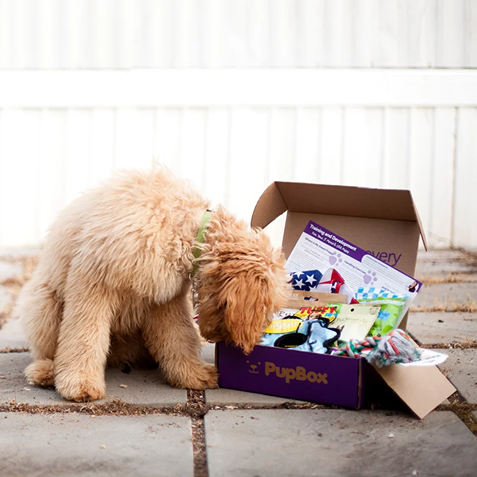 pupbox subscription box for pets