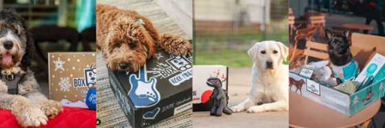 boxdog subscription box for dogs