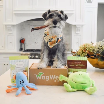 WagWell subscription box for dogs